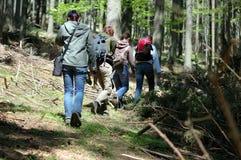 El pasar a través de bosque Fotografía de archivo libre de regalías