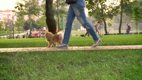 El paseo de la mujer en parque con el perro en d3ia en verano, relaja concepto almacen de metraje de vídeo