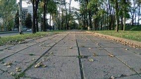 El paseo en el día caliente del movimiento lento del parque del otoño se va en el camino metrajes