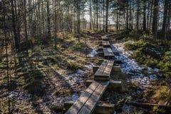 El paseo marítimo del pantano es un destino turístico popular en el parque nacional de Lahemaa Estonia Primaveras tempranas