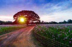 El paseo y los árboles grandes en la puesta del sol Imágenes de archivo libres de regalías