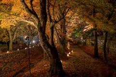 El pasillo del arce de Kawaguchiko enciende para arriba festival Foto de archivo