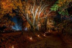 El pasillo del arce de Kawaguchiko enciende para arriba festival Imagen de archivo libre de regalías