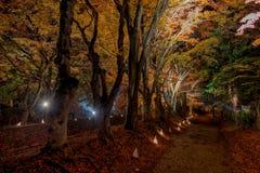 El pasillo del arce de Kawaguchiko enciende para arriba festival Foto de archivo libre de regalías