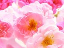 El pastel rosado se levantó fotografía de archivo libre de regalías