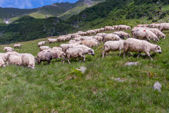El pastor Foto de archivo libre de regalías