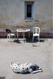 El patio del pueblo con la carpa y perca y perro Dalmati foto de archivo libre de regalías