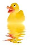 El pato imagen de archivo