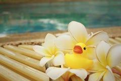 El pato de goma amarillo con pluemeria florece en la piscina Imágenes de archivo libres de regalías