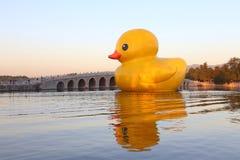 El pato del ruibarbo del palacio de verano Foto de archivo