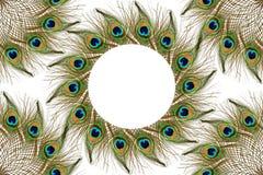 El pavo real hermoso empluma como fondo con el espacio de la copia del texto Imágenes de archivo libres de regalías