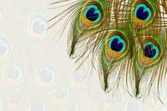 El pavo real hermoso empluma como fondo con el espacio de la copia del texto Imagen de archivo