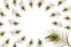 El pavo real hermoso empluma como fondo con el espacio de la copia del texto Foto de archivo
