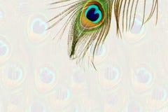 El pavo real hermoso empluma como fondo con el espacio de la copia del texto Foto de archivo libre de regalías