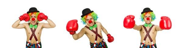 El payaso con los guantes de boxeo aislados en el blanco imágenes de archivo libres de regalías