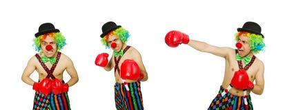El payaso con los guantes de boxeo aislados en el blanco fotos de archivo libres de regalías