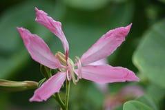 El pedal rosado de la flor foto de archivo