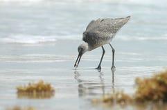 El peinarse de la playa Imagen de archivo libre de regalías