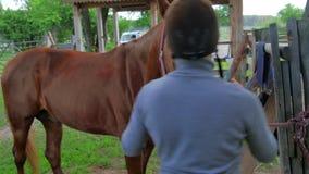 El peine del hombre la melena de un caballo marrón almacen de video