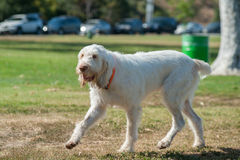 El pelo blanco largo consigue sucio en el parque Imágenes de archivo libres de regalías