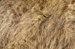El pelo de camello Imagen de archivo