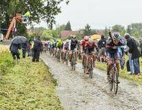 El Peloton en un Tour de France Cobbled 2014 del camino Imagen de archivo