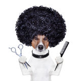 El peluquero scissors el perro del peine Imagen de archivo