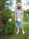 El pensionista es flores de corte en jardín Imagen de archivo libre de regalías