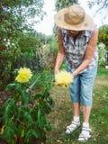 El pensionista es flores de corte en jardín Fotos de archivo libres de regalías
