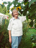 El pensionista está mirando sus girasoles en su jardín Imagen de archivo