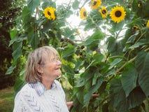 El pensionista está mirando sus girasoles en su jardín Fotografía de archivo