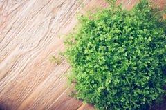 El pequeño arbusto verde adornó el interior en la tabla de madera marrón Fotografía de archivo libre de regalías