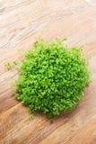 El pequeño arbusto verde adornó el interior en la tabla de madera marrón Fotografía de archivo