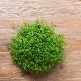 El pequeño arbusto verde adornó el interior en la tabla de madera marrón Imágenes de archivo libres de regalías