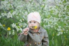 El pequeño bebé con Síndrome de Down en la boca tira de los dientes de león Fotografía de archivo