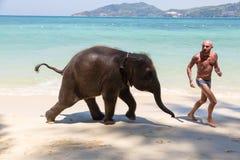 El pequeño becerro del elefante nada en el mar con el hombre fotografía de archivo