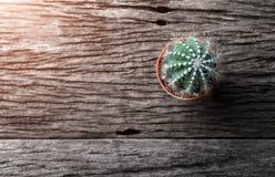 El pequeño cactus puso la placa de madera vieja Foto de archivo