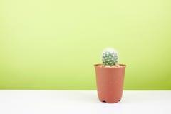 El pequeño cactus verde en pequeño pote marrón de la planta Imagen de archivo
