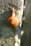 El pequeño caracol en la pared Foto de archivo libre de regalías