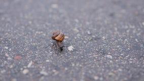 El pequeño caracol se arrastra en el asfalto Fotografía de archivo
