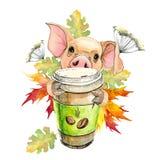 El pequeño cerdo bebe el café sostiene una taza en sus enganches otoño, hojas, arce stock de ilustración