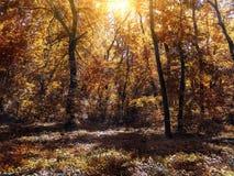 El pequeño claro en el bosque del otoño se encendió por el sol Foto de archivo libre de regalías