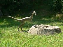 El pequeño dinosaurio despredador debe robar los huevos de dinosaurio de la jerarquía en la madera del parque de la extinción en  Foto de archivo libre de regalías