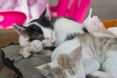 El pequeño dormir del gatito imagen de archivo libre de regalías