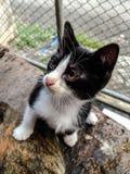 El pequeño escepticismo de la cara del gato, con algunas de las cosas que nunca se han considerado Fotografía de archivo