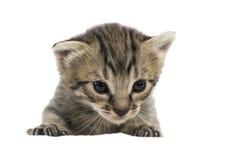 El pequeño gatito aislado en blanco Imagen de archivo