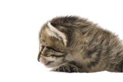 El pequeño gatito aislado en blanco Imágenes de archivo libres de regalías