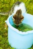 El pequeño gatito bebe el agua Foto de archivo