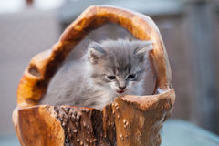 El pequeño gatito dulce se sienta en la cesta de madera Foto de archivo libre de regalías