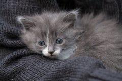 El pequeño gatito dulce se sienta en la mano Imagen de archivo